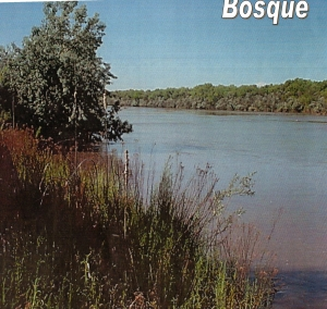 Jardines de Bosque: An Archive and History