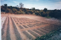 Ancient Agriculture: Photo Archive