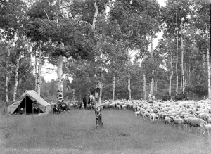 New Mexico Sheep Camp.  Tyler Dingee  1920s - 1950s
